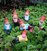 Garden Gnomes From Thuringia